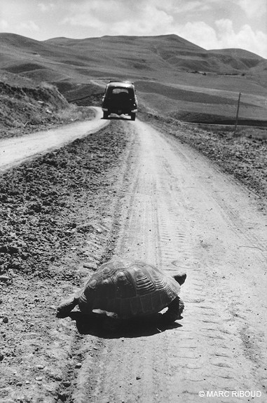 Turkey, by Marc Riboud 1955