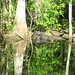 Alligator Canal   DSCN3352