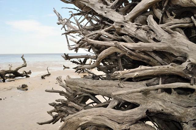 Big Talbot Island Driftwood Beach