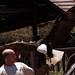 Exhibición de Rapaces.Palmitos Park.Gran Canaria