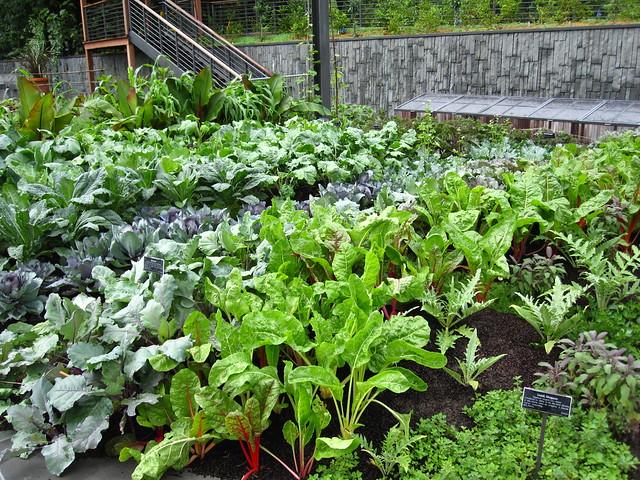 BBG's Herb Garden. Photo by Rebecca Bullene.