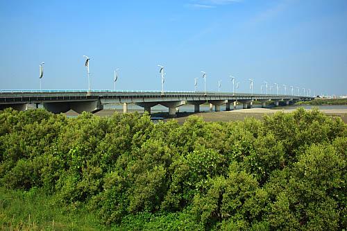 11Q8朴子溪生態-紅樹林-東石大橋