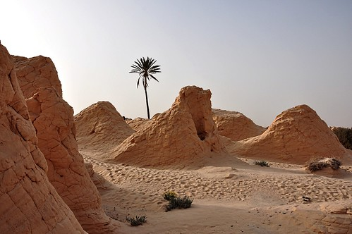 "africa this photo rocks tramonto tunisia dune natura tramonti palme soe luce deserto sera sabbia cespugli thisphotorocks flickrestrellas worldtrekker ""flickraward"" tripleniceshot ringexcellence"