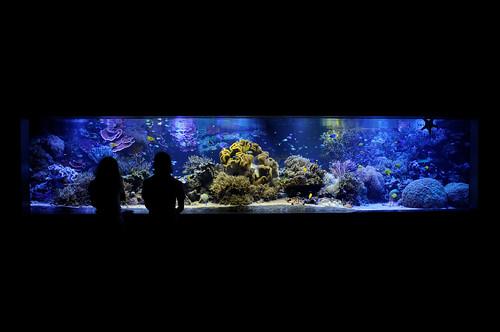 20100716 Aquarium 1 - 無料写真検索fotoq