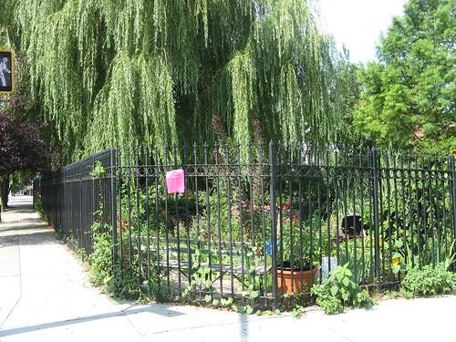 Greenest Block in Brooklyn Finalist