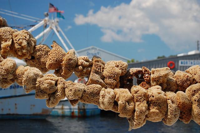 Sponge Docks 088/365