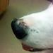 Ouzo's Nose Peeling by Anda74