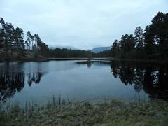 loch(0.0), wetland(1.0), floodplain(1.0), reservoir(1.0), bank(1.0), fish pond(1.0), lake(1.0), body of water(1.0), reflection(1.0), wilderness(1.0), pond(1.0), waterway(1.0), marsh(1.0),
