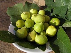 03  figs at the villa in Tuscany