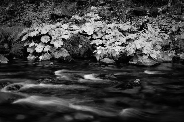 Water studies merced river rock garden flickr photo for Landscaping rocks merced ca