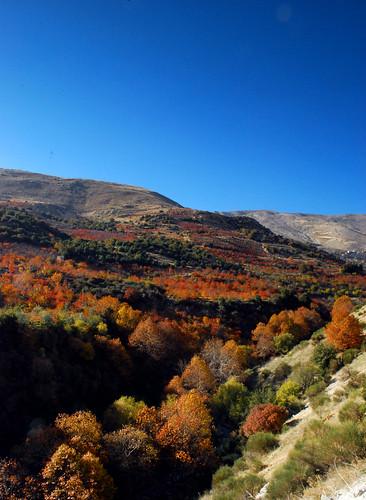 autumn trees leaves zahle berdawni kaalrim
