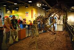 Navy Pier Dinosaur Bones