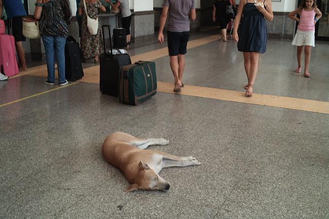 Un chien dort dans un hall de gare - © boklm