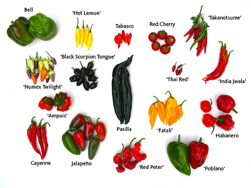 Herb Garden Peppers