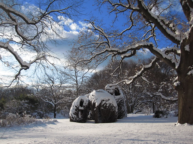 Natural History after the Jan 27 snowstorm. Photo by Rebecca Bullene.