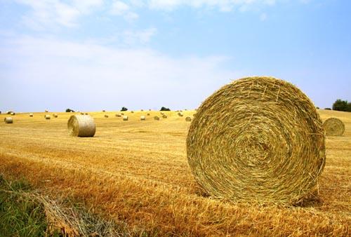 Il mercatino di bio ad alessandria solo prodotti - Mercatino alessandria ...