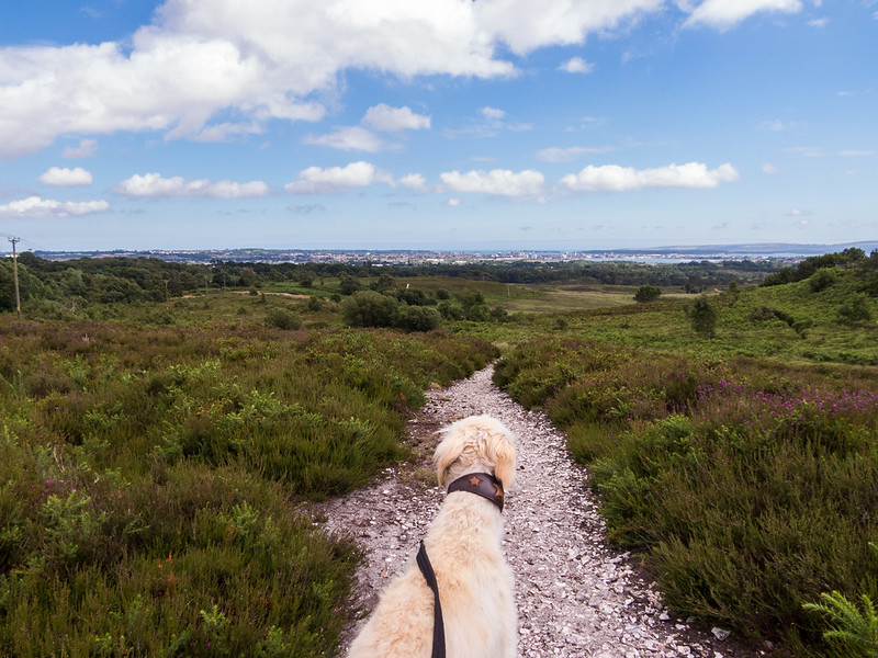 Heading down from the top of Upton Heath