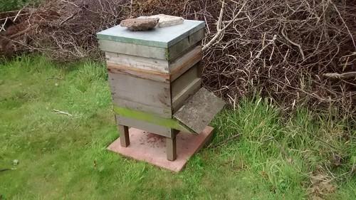 bee hives Jul 17 2