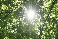 Sonnenschein durch's Blätterdach