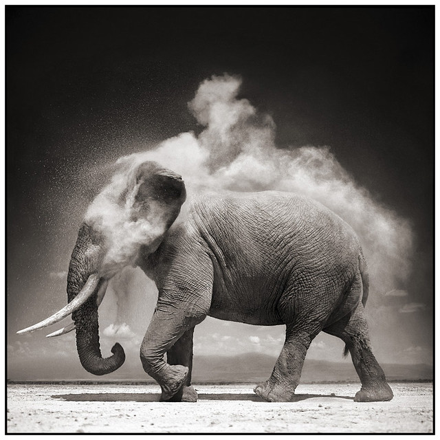 Elephant With Exploding Dust, by Nick Brandt