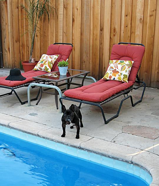 backyard poolside lounge chairs French Bulldog sharp