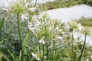 Hampton Court Flower Show 2010