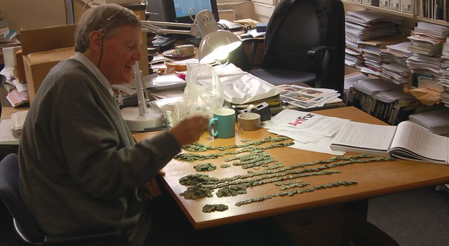 Roger Bland sorts coins from the Frome Hoard