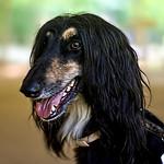 El primer perro clonado de la historia