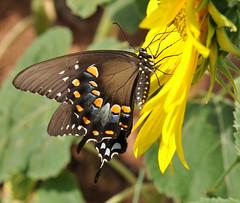 Butterfly Beauty