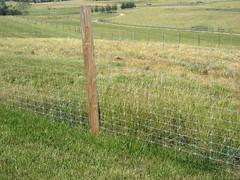 Sheep 201: Fencing