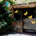 La Casa de las Mariposas.Palmitos Park.Gran Canaria