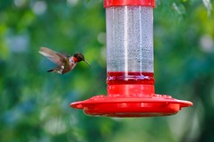 finch(0.0), cardinal(0.0), animal(1.0), hummingbird(1.0), red(1.0), fauna(1.0), bird feeder(1.0), bird(1.0),