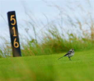 Possible Birdie at the Par 5 16th Hole