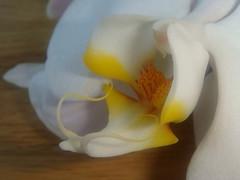 orchideen dekorative dauerblumen irgendwas ist doch immer. Black Bedroom Furniture Sets. Home Design Ideas