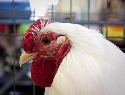 Indiana State Fair Chicken