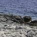 Small photo of Maly Losinj Shore