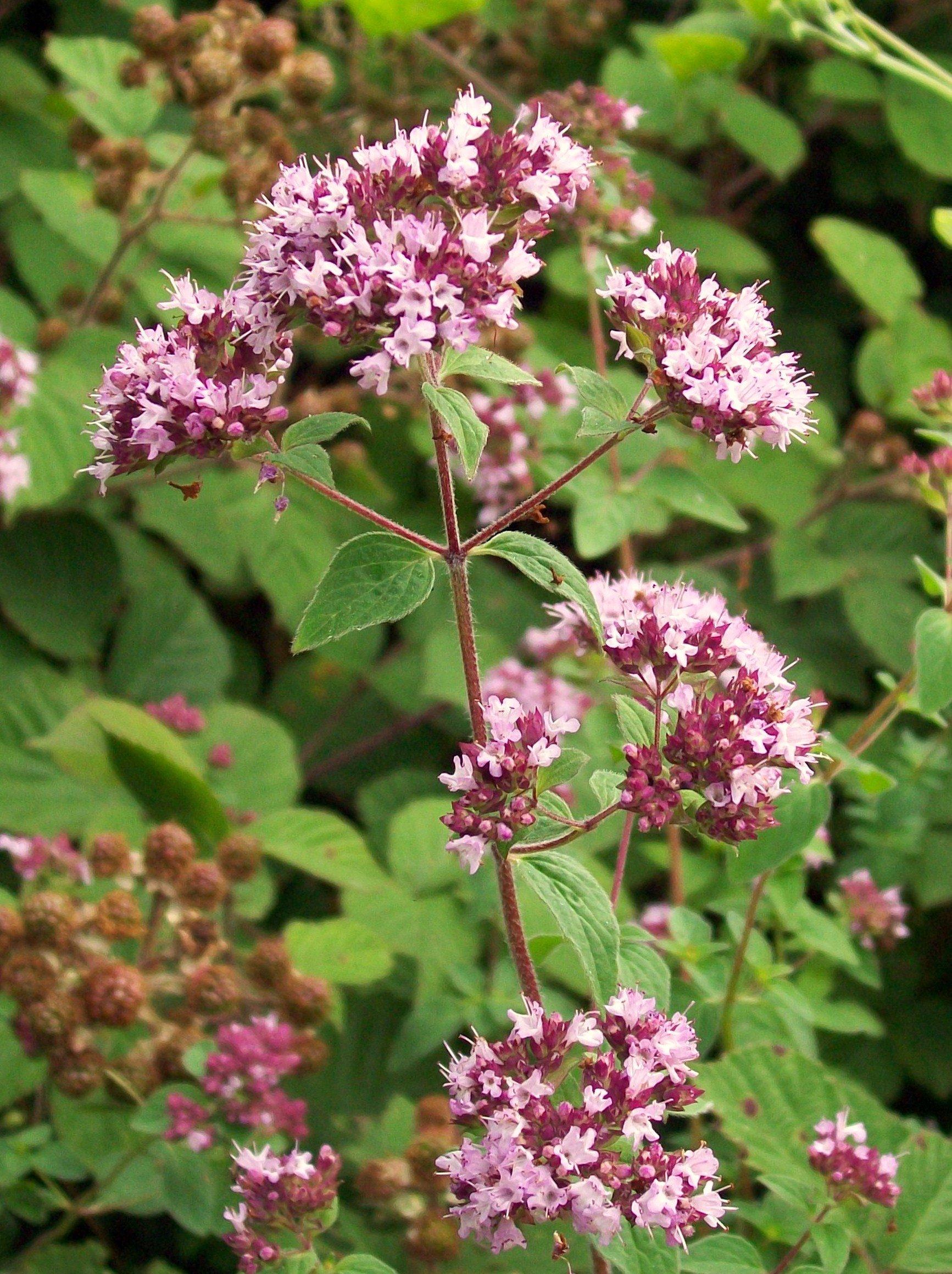 smelling sensory plants