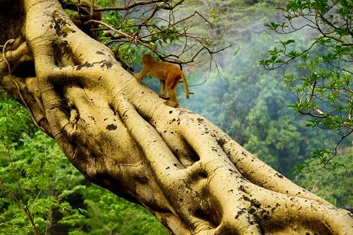 Monkey Climbing Tree