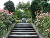 Steps in Rose Garden by sfgamchick