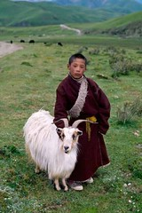 Tibet, 2001, by Steve McCurry