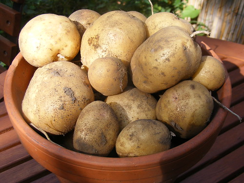 potatoes2010