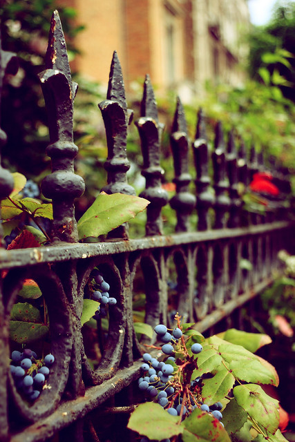 Fence'n berries