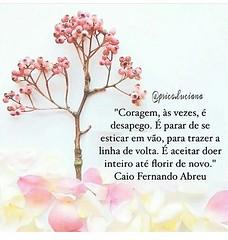 Coragem. .. #blogauroradecinemafrases  #caiofernandoabreu #toptags #20likes #instagood #strong