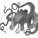 Octopus Drawing by ajam503