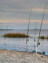 fishing, sea, casting fishing, surf fishing, mudflat, shore,