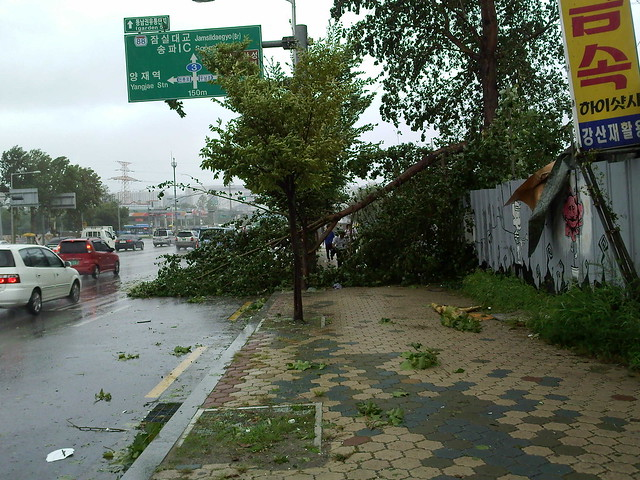 태풍의 증거