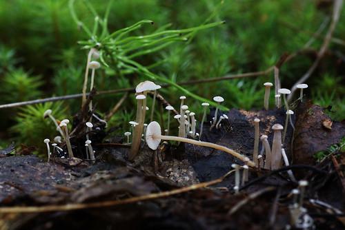 Автор - Татьяна Бульонкова (Новосибирск)  Источник: flickr Автор фото: Татьяна Бульонкова