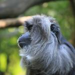 2225 macaque monkey