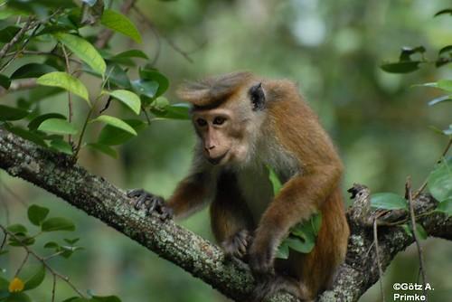 SriLanka_11_Kandy_Botanical_Garden_2010_064