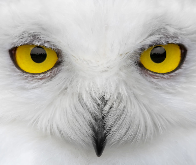 Look into my eyes....